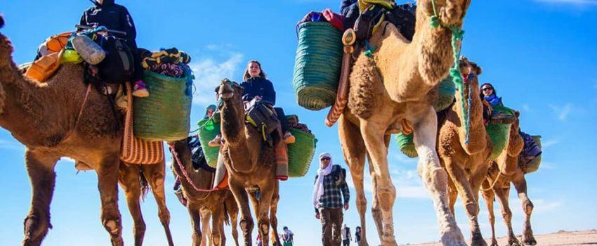 camel ride in Marrakech palm grove