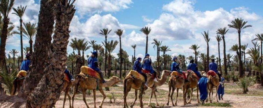 Tour de Marrakech en dromadaire