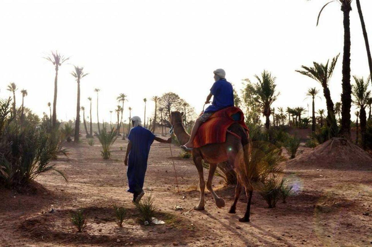 Balades en chameaux à Marrakech pas cher